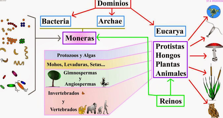 Dominio archaea reproduccion asexual de las plantas