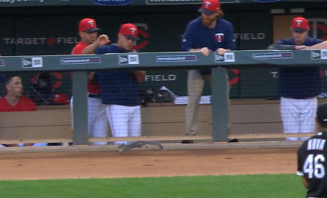 Squirrel runs in front of Minnesota Twins dugout 8/19/2019