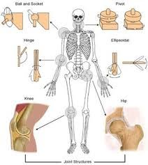 the fascia therapy blog: the joint: according to me, Human Body
