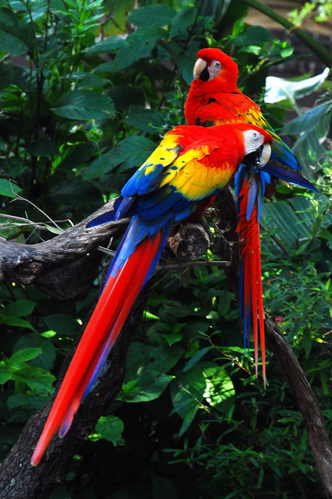 biodiversity rainforest - photo #12