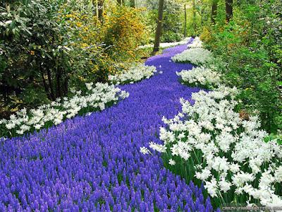 خلفيات طبيعية ساحرة زهور