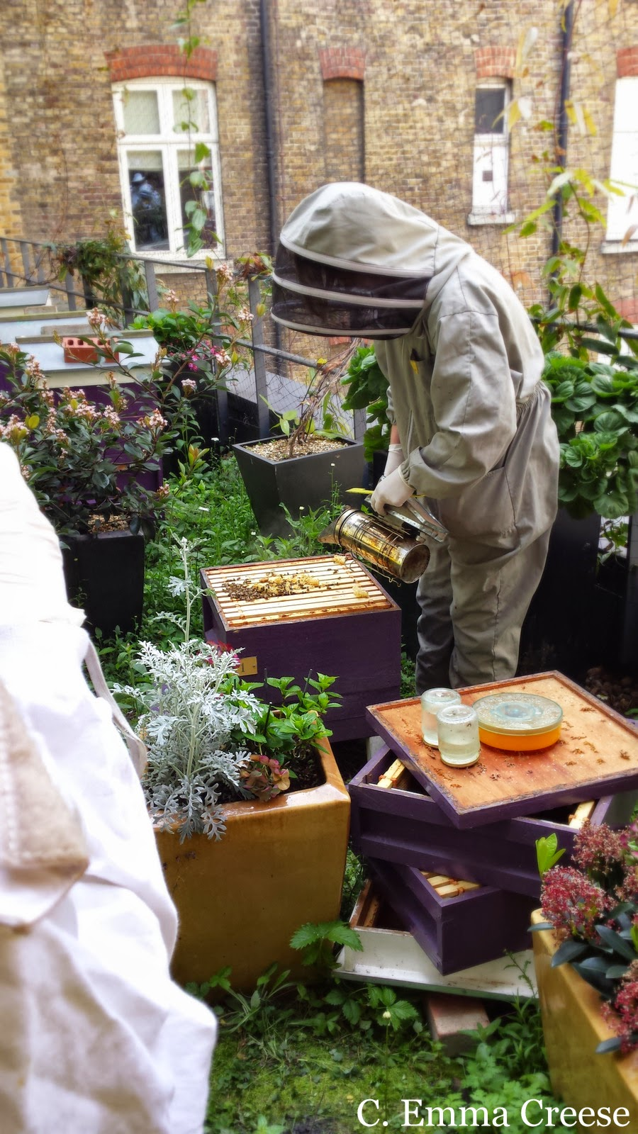 Beekeeping Course at St Ermin's Hotel Westminster