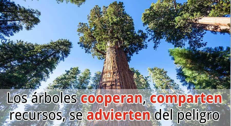 El lenguaje secreto de los árboles
