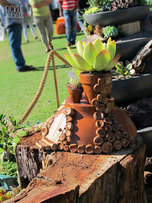 Succulent miniature garden terracotta hobbit house