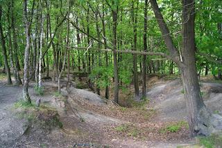 Im Wald sind mehrere Sandhügel
