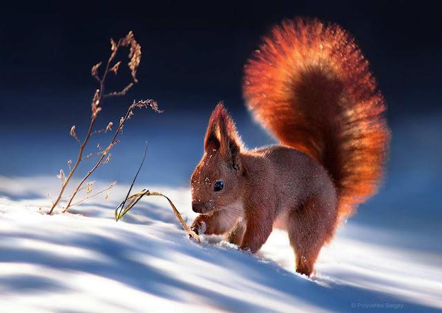 صور حيوانات جميلة