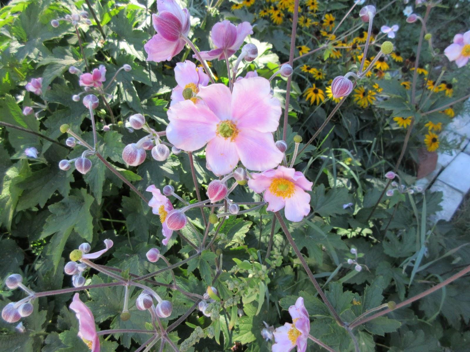 Marlenes Space Late Summer Flowers