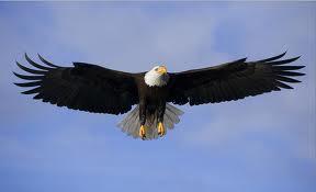 Sonhar com águia gigante