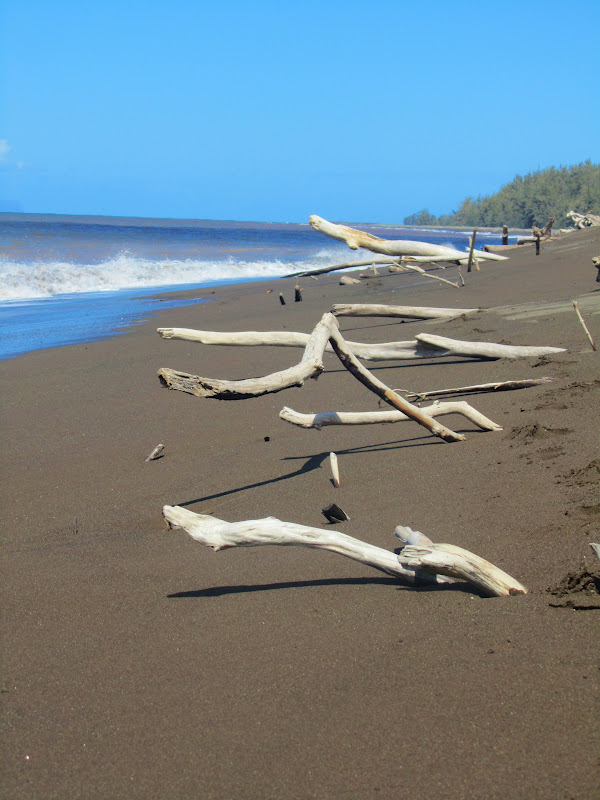 The Black Brown Sand Beach Is Littered With Stark Branches Of Driftwood