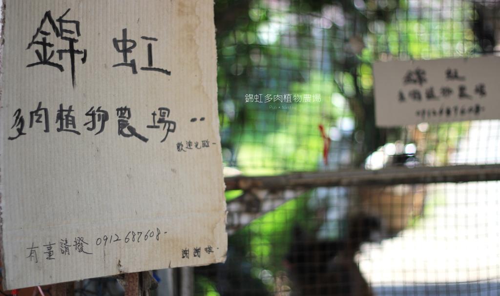 錦虹多肉植物農場│南投埔里,隱藏的療癒多肉農場。 By Oscar