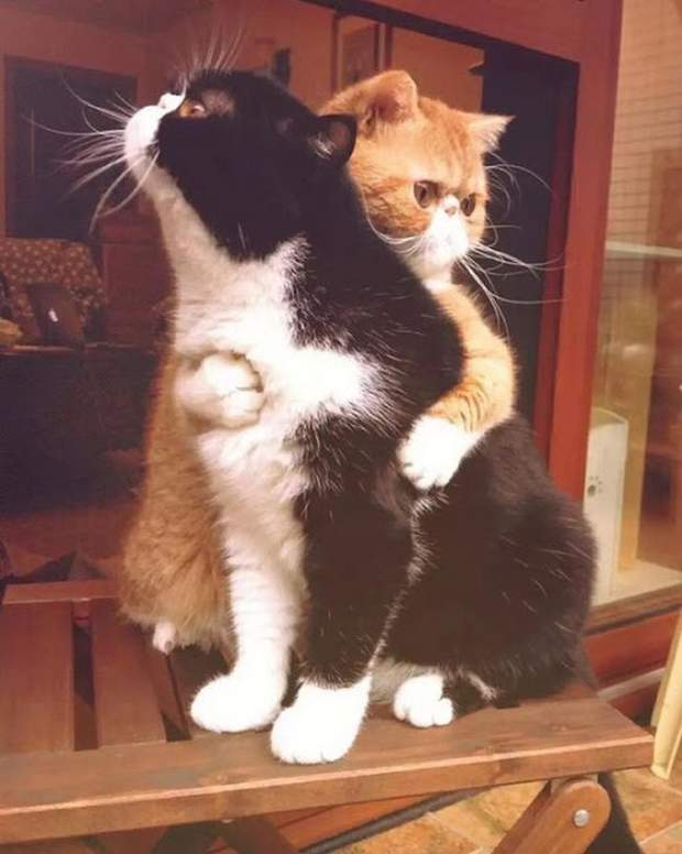 Funny cats - part 228, funny cat photo, cute cat pictures, best cute cat photos