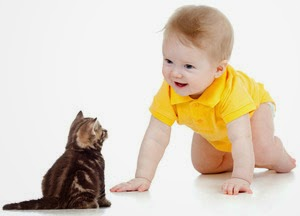 Cat dander allergy in children
