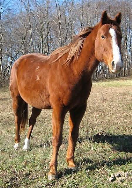 Лошадь и холод