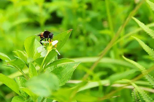 black and red fly on weed flower