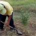 COMAS: EXTRAEN PLANTA DE MARIHUANA EN PARQUE DE COMAS