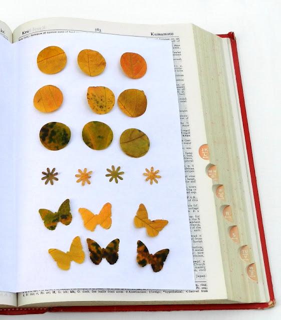dried leaf shapes