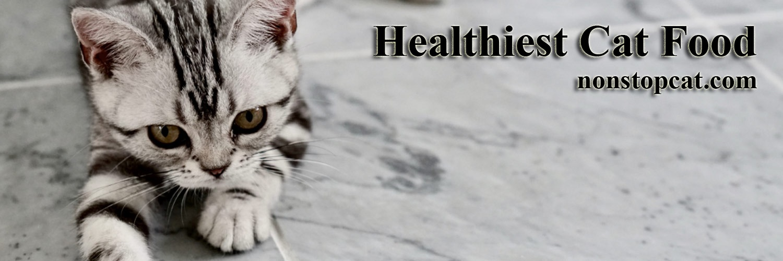 Healthiest Cat Food