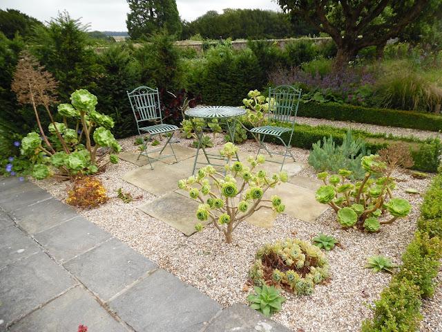 kacik wypoczynkowy w ogrodzie, eonium