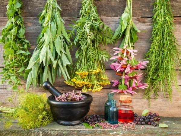 5 Healing Herbs You Must Know About!