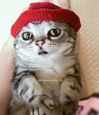 Masih Ingat Luhu ? Kucing Yang Bertampang Paling Menyedihkan, Begini Kehidupannya Setelah Viral 30
