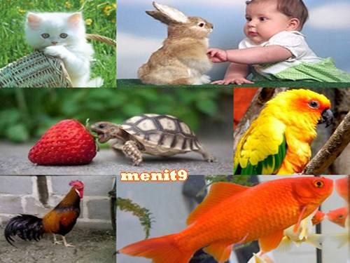 750 Koleksi Gambar Hewan Lucu Yang Mudah Di Gambar HD