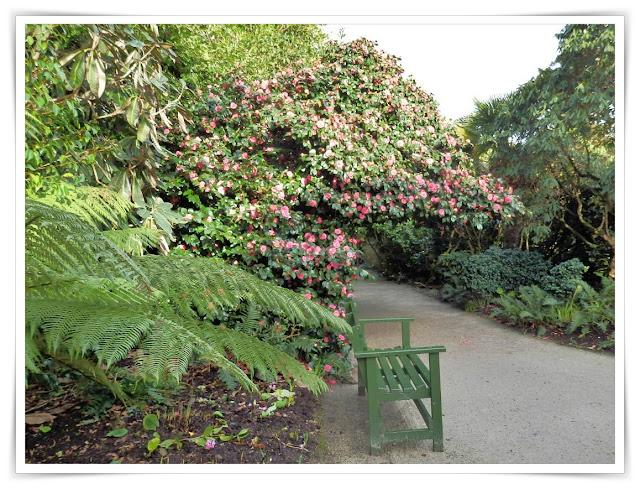 Lost Gardens of Heligan, Cornwall in winter