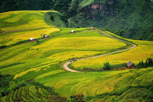 Glistering Terraced Fields in Bat Xat, Lao Cai 1