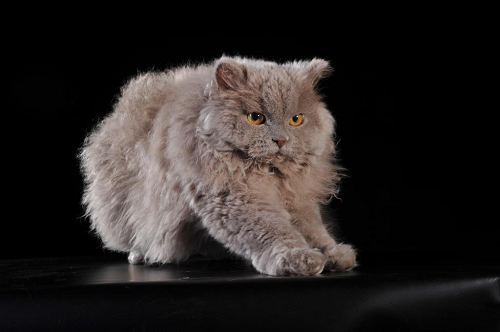The most stunning and amazing cats
