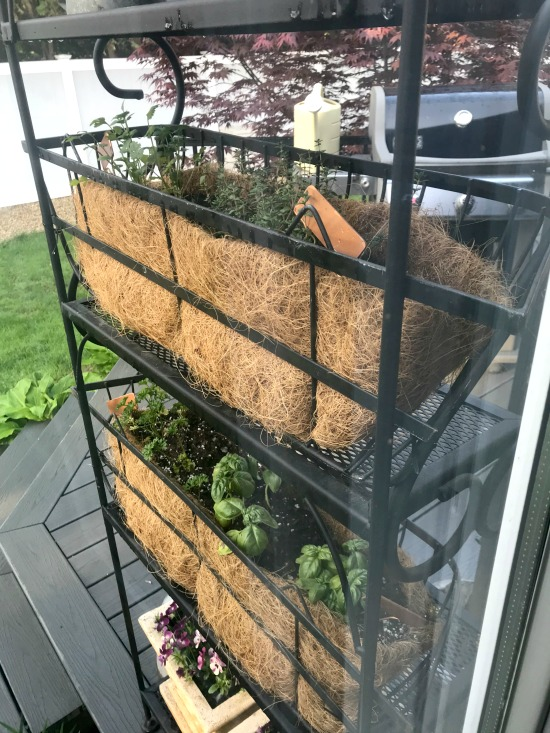 The back of an herb garden plant stand using a baker's rack