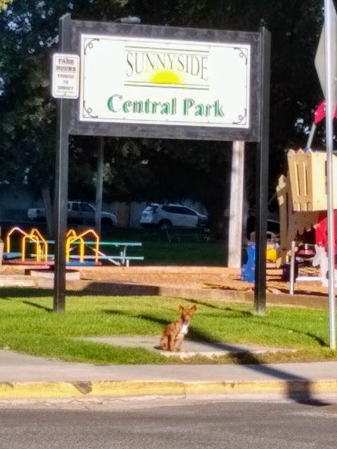 Stray dog at the park