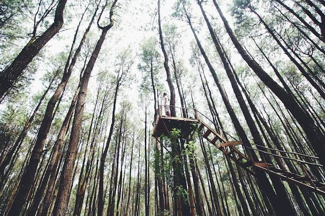 rumah pohon hutan pinus pengger