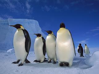 Pingvini slike besplatne pozadine za desktop free download hr