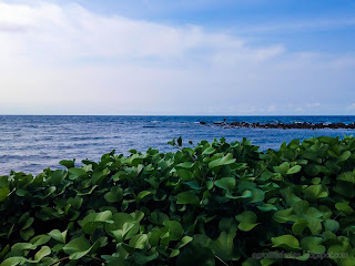 Exotic Beach View From The Leaves Of Goat's Foot Plants At Umeanyar Village, North Bali, Indonesia