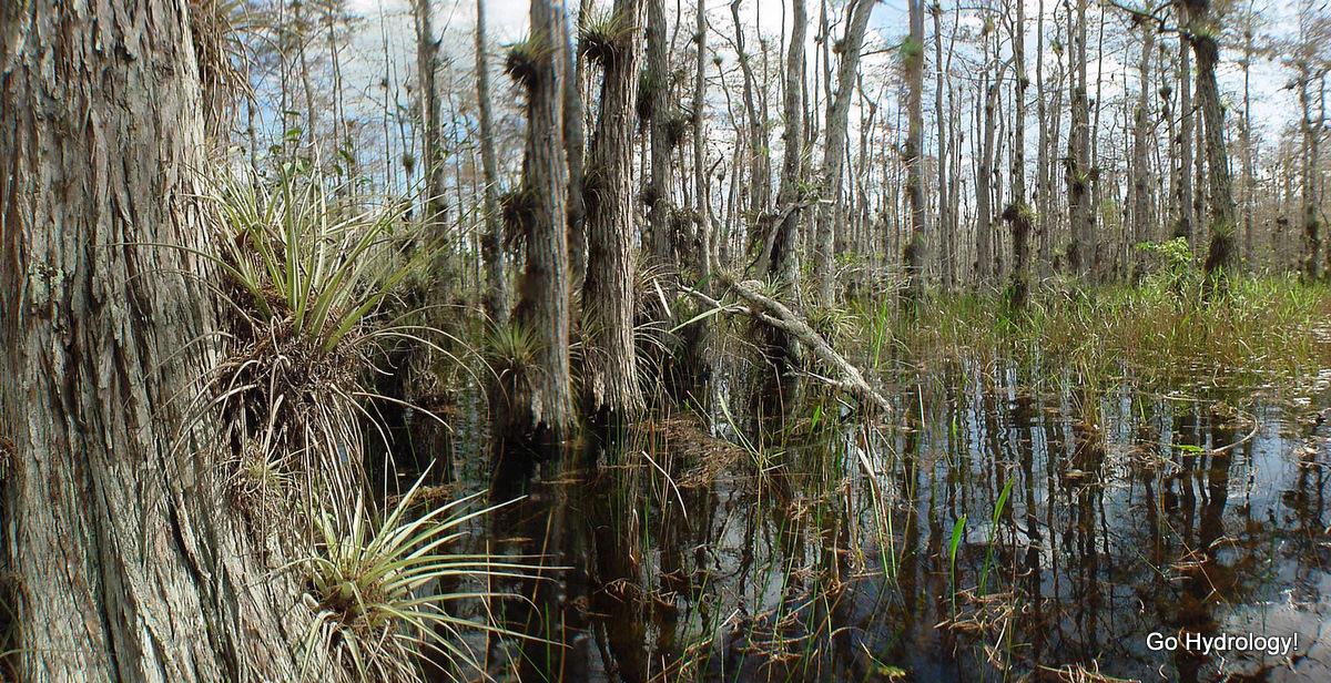 swamp definition | hrant