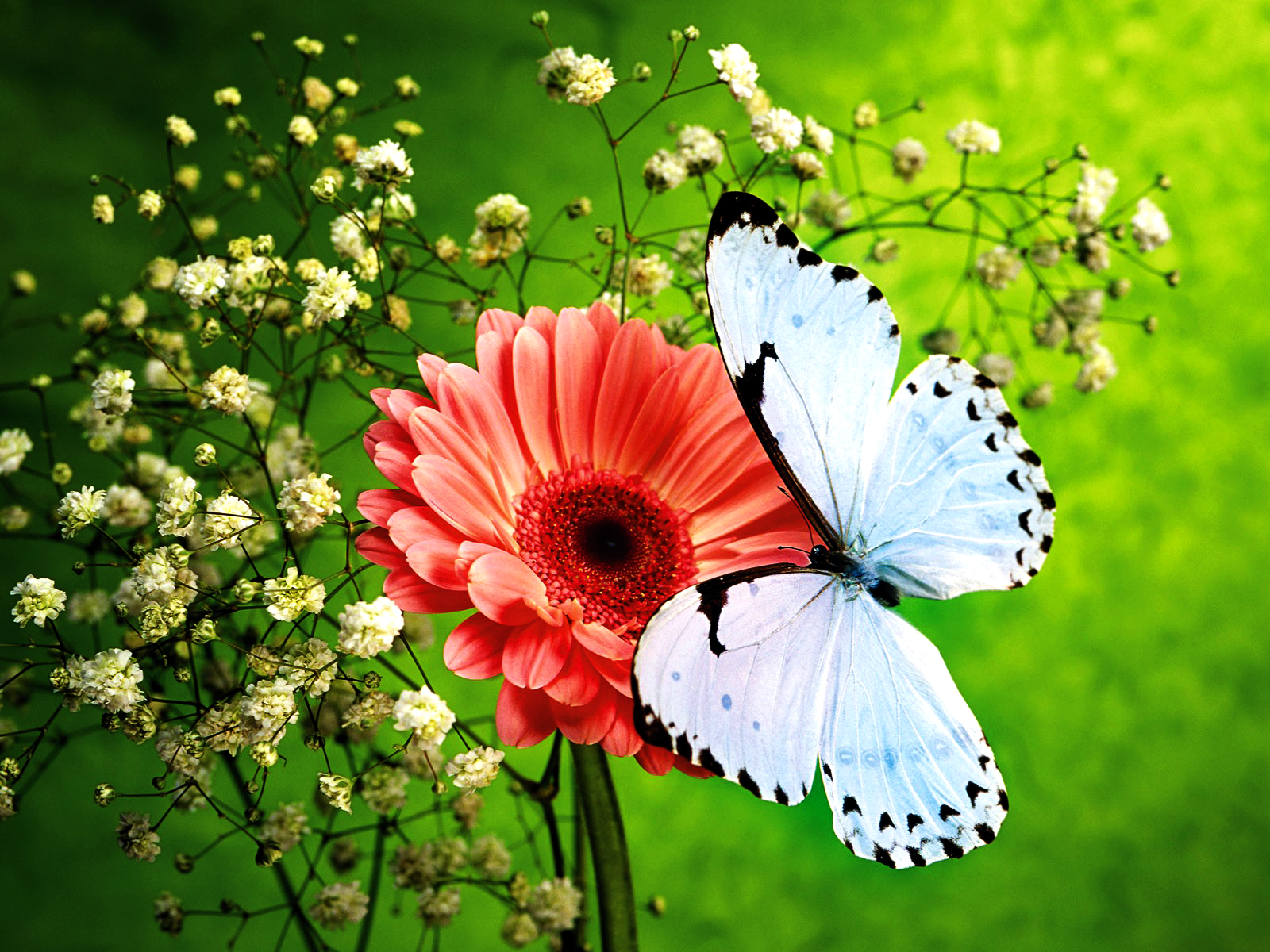 ImagesList.com: Wallpapers With Butterflies 6