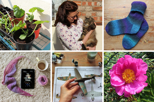 The Butterfly Balcony: Wendy's Week Kitty Cuddles & Compelling Yarns - Marrows ready to be planted // Me and the fury one // Finished Socks // New book and new knitting // My Airfix addiction continues // Pretty Peony in my garden