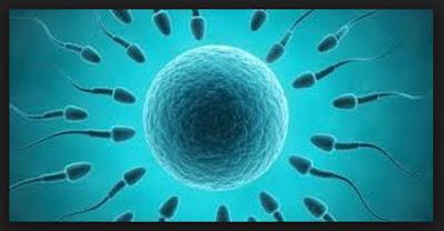 Jenis-jenis Penyakit Sistem Reproduksi