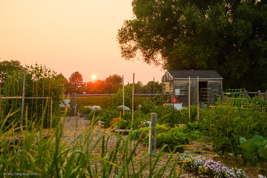 Portland, Maine USA July 2018 photo by Corey Templeton. A Sunset on a hot summer night at the Casco Bay Community Garden on Munjoy Hill.
