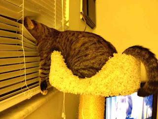 Cat peers