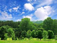Ancaman Terhadap Pohon Endemik