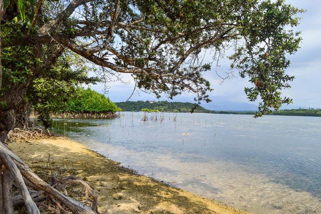 Magalawa Island Mangrove