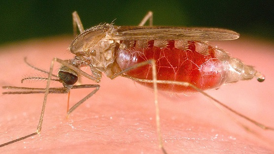 What is Malaria: Symptoms and Treatment