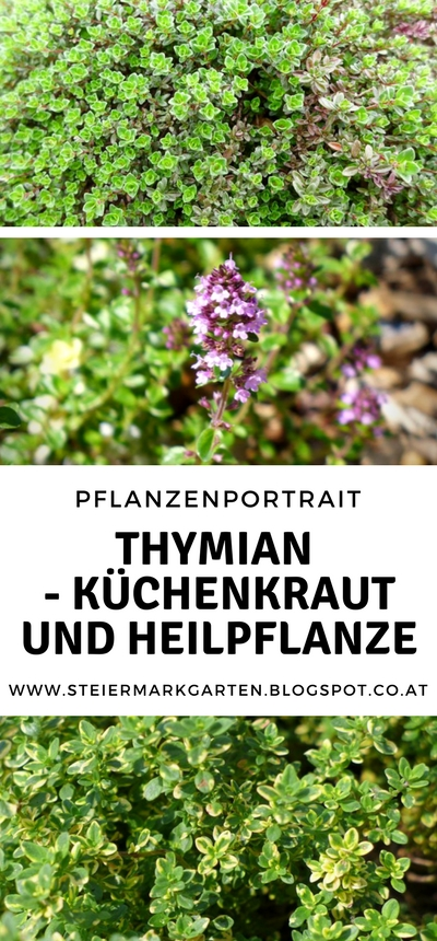 Thymian-Pin-Steiermarkgarten