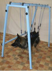 reabilitação muscular em cães