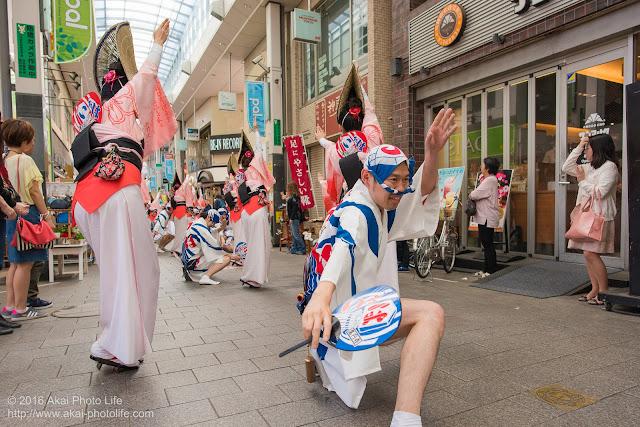 高円寺パル商店街、いろは連の流し踊りの写真 2