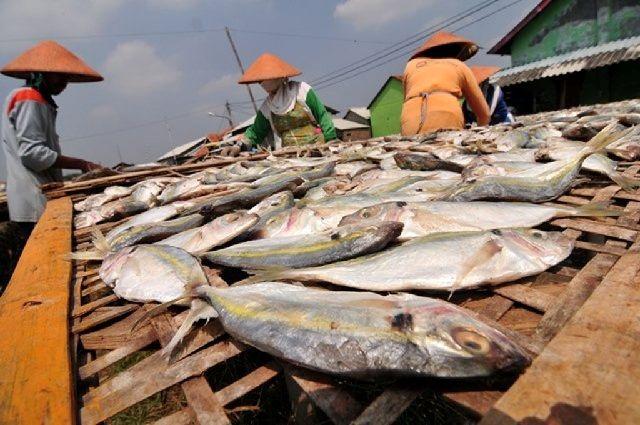 Download 75 Koleksi Gambar Ikan Asin Bakar HD Terpopuler