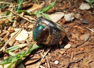 Batu Kalimaya Black Opal Indah Jarong Ikatan Perak KLM001