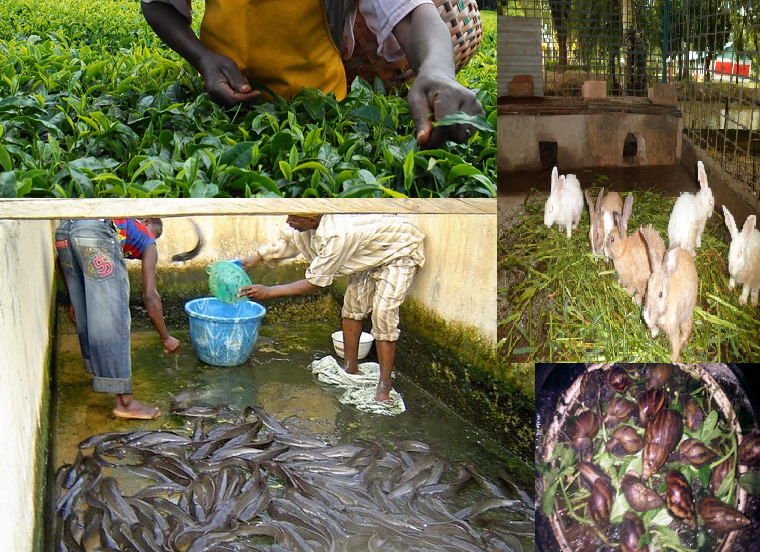 How To Start Your Own Fish Farming Business