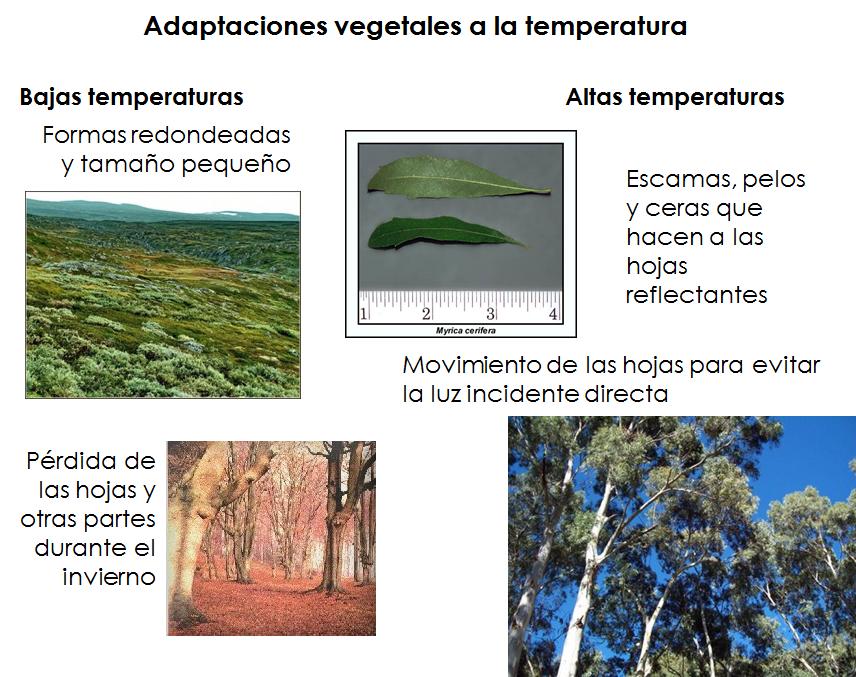 2 0 los seres vivos y las condiciones de su entorno for Plantas fundamentales