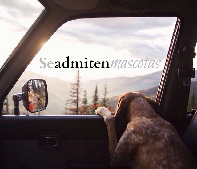 Se admiten mascotas - Thiswildidea (Theron Humphrey)
